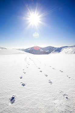Looking towards the Angels Peak and Braeriach across the Lairig Ghru from Ben Macdui, with footprints in the foreground in winter, Cairngorm mountains, Scotland, United Kingdom, Europe