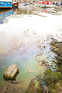 Oil pollution in Lyme Regis harbour, probably from a fishing vessel, Dorset, England, United Kingdom, Europe