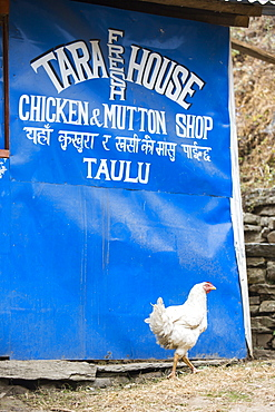 A butchers shop on the Annapurna base Camp trek in the Nepalese Himalayas, Nepal Asia