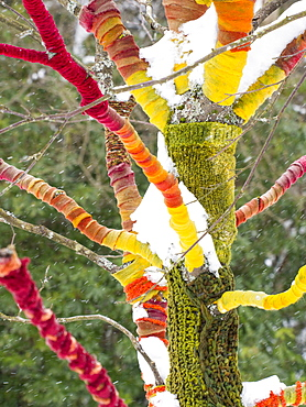 A tree wrapped in wool in the grounds of Rydal Hall, Ambleside, Lake District, Cumbria, England, United Kingdom, Europe