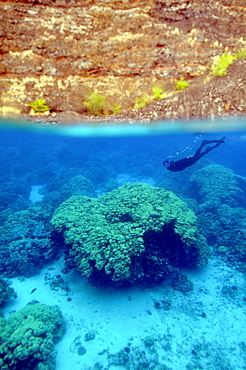 Snorkelling at Kealakekua Bay, Kailua-Kona, Big Island, Hawaii, United States of America, Pacific