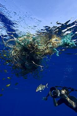 Photographer Masa Ushioda photographs almaco jack (Seriola rivoliana), offshore near Kailua-Kona, Hawaii, United States of America, Pacific