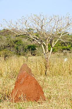 Termite mound, Pantanal, Miranda, Mato Grosso do Sul, Brazil, South America