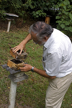 Bee hive being opened by university professor, Vicosa, Minas Gerais, Brazil, South America