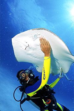divers enjoying stingray diving in Barbados, Caribbean