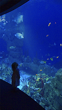 Families enjoying a day out at the aquarium in Plymouth Devon . UK   (rr)