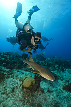 Close encounters with Nurse shark on G Spot Reef, Turks and Caicos, West Indies, Caribbean, Central America