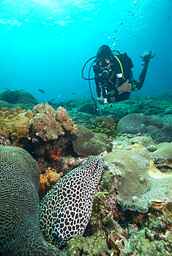 Spotted eel, Dimaniyat Islands, Gulf of Oman, Oman, Middle East