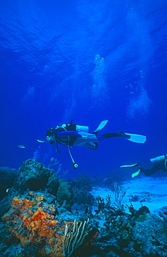 Divers on reef. Mexico.