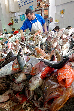 Fishmonger displaying freshly caught fish in Tangier fish market, Tangier, Morocco, North Africa, Africa