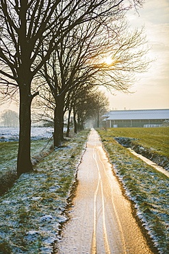 The Oude Trambaan (old tramway) tree lined cycle path in winter, Rijsbergen, North Brabant, The Netherlands (Holland), Europe