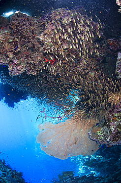 Coral reef scene, Ras Mohammed National Park, Sharm el-Sheikh, Red Sea, Egypt, North Africa, Africa