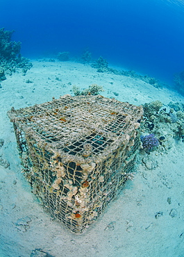 Underwater view of a coral encrusted lobster pot on sandy ocean floor, Ras Mohammed National Park, Red Sea, Egypt, North Africa, Africa