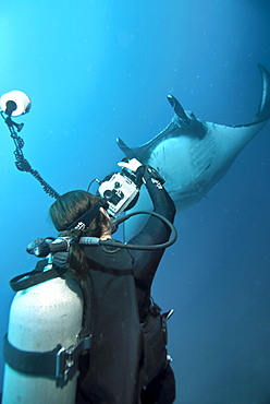 Research diver approaching manta birostris to record detail in research program, Project Elasmo. Pacific Ocean, Ecuador