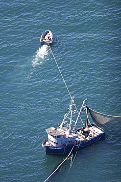 Aerial view of the purse-seiner fishery for salmon off Point Augustus, Chichagof Island, Southeast Alaska, USA. Skiff keeping the big boat out of the net.   (RR)
