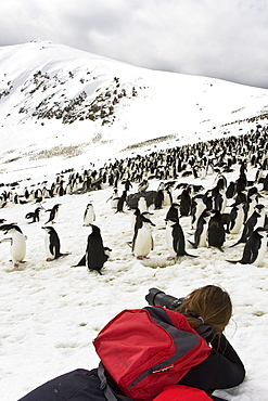Chinstrap penguin (Pygoscelis antarctica) colony on Bailey Head on Deception Island in the South Shetland Islands near the Antarctic Peninsula