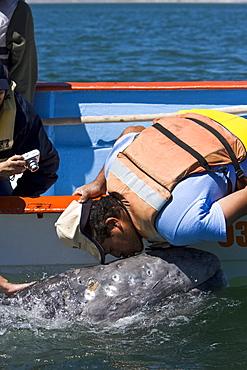 Excited whale watchers reach out to touch a California Gray Whale (Eschrichtius robustus) in San Ignacio Lagoon, Baja Peninsula, Baja California Sur, Mexico