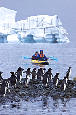 Guests from the Lindblad Expedition ship National Geographic Endeavour kayaking with Adelie penguins on icebergs in and around the Antarctic Peninsula