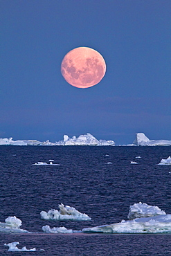Full moon (plus 1 day) rising over icebergs in the Weddell Sea, Antarctica. MORE INFO This moonrise occurred on January 1, 2010, the night after the blue moon full of December 31, 2009.