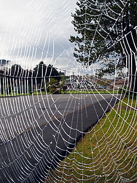 Spider web soaked in the morning dew in Prince Rupert, British Columbia, Canada.
