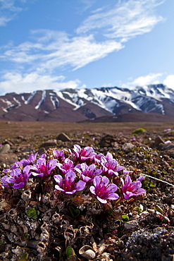 Scenic views of open tundra in the Svalbard Archipelago of Norway.