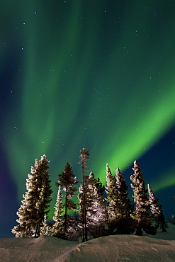 Aurora Borealis (Northern (Polar) Lights) over the boreal forest outside Yellowknife, Northwest Territories, Canada