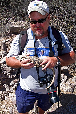 Staff member from the Lindblad Expedition ship National Geographic Sea Bird holding an endemic pinto chuckwalla on Isla San Esteban, Mexico.