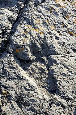 150 million year old fossilised footprint (ichnite) of theropod dinosaur in karst limestone rock, Terenes, Asturias, Spain, Europe